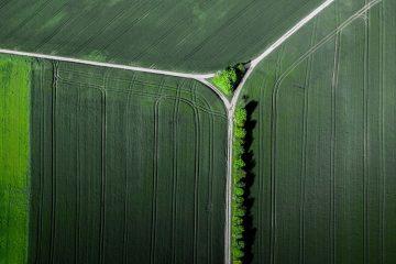 Luftbild senkrecht Bäume